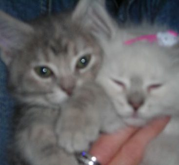 New Kittens - Carey and her Husband rescued 2 kittens Bella Bond 007 and Hello Kitty Bardot