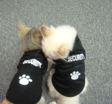 Eye Spy Security Cats - Bella Bond 007 and Bardot dress up in their Secuity outfits and get ready for work.